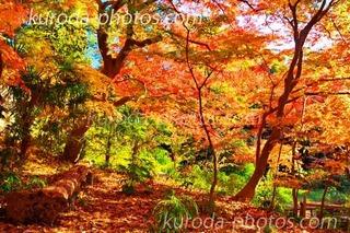 _O7A3660のコピー.jpg